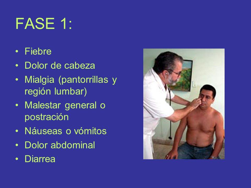 FASE 1: Fiebre Dolor de cabeza Mialgia (pantorrillas y región lumbar) Malestar general o postración Náuseas o vómitos Dolor abdominal Diarrea