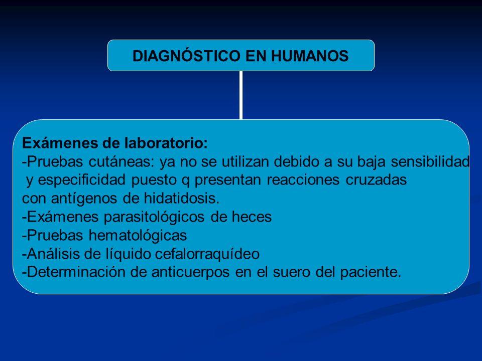 DIAGNÓSTICO EN HUMANOS Exámenes de laboratorio: -Pruebas cutáneas: ya no se utilizan debido a su baja sensibilidad y especificidad puesto q presentan