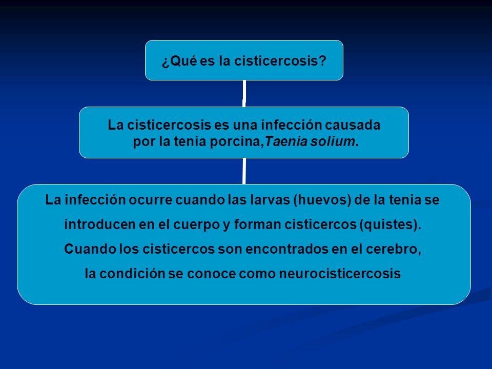 ¿Qué es la cisticercosis? La cisticercosis es una infección causada por la tenia porcina,Taenia solium. La infección ocurre cuando las larvas (huevos)