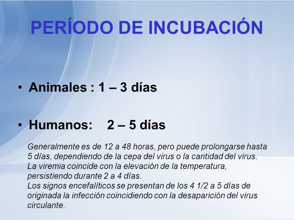 PERÍODO DE INCUBACIÓN Animales : 1 – 3 días Humanos: 2 – 5 días Generalmente es de 12 a 48 horas, pero puede prolongarse hasta 5 días, dependiendo de