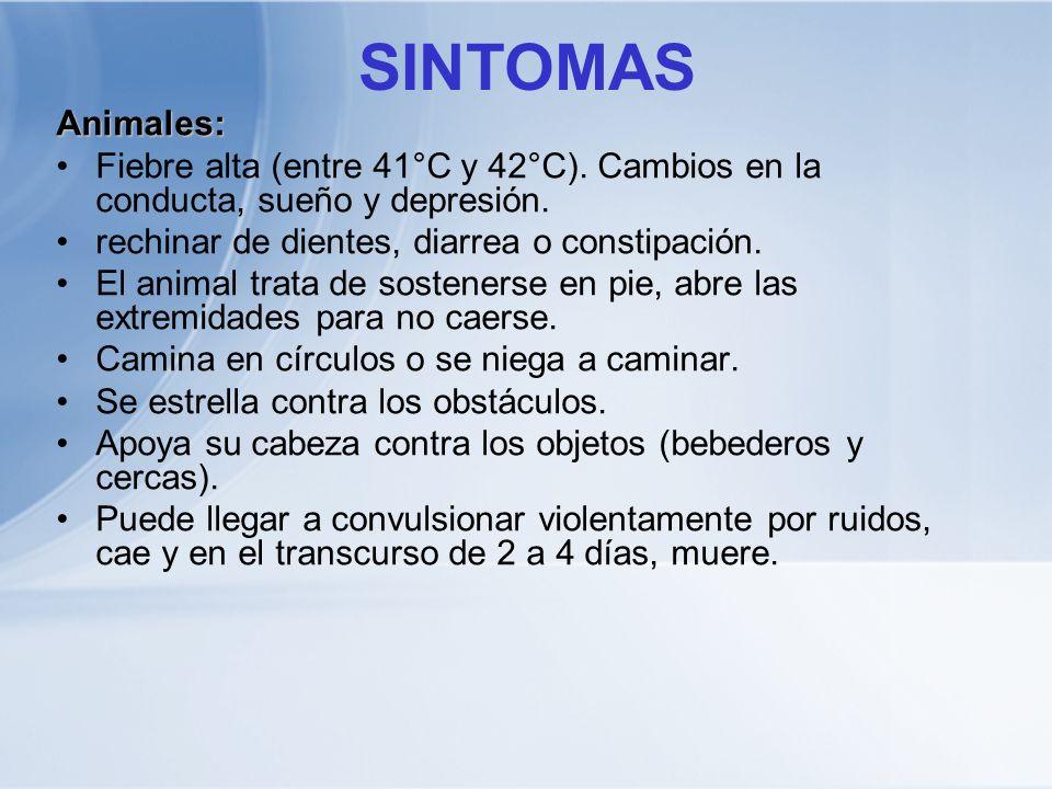 SINTOMASAnimales: Fiebre alta (entre 41°C y 42°C). Cambios en la conducta, sueño y depresión. rechinar de dientes, diarrea o constipación. El animal t