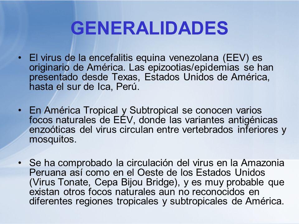 GENERALIDADES El virus de la encefalitis equina venezolana (EEV) es originario de América. Las epizootias/epidemias se han presentado desde Texas, Est