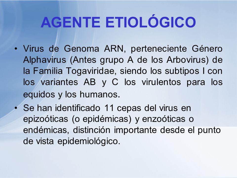 AGENTE ETIOLÓGICO Virus de Genoma ARN, perteneciente Género Alphavirus (Antes grupo A de los Arbovirus) de la Familia Togaviridae, siendo los subtipos