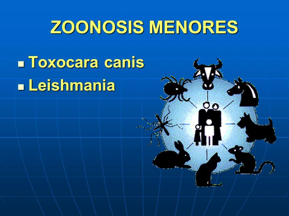 ZOONOSIS MENORES Toxocara canis Toxocara canis Leishmania Leishmania