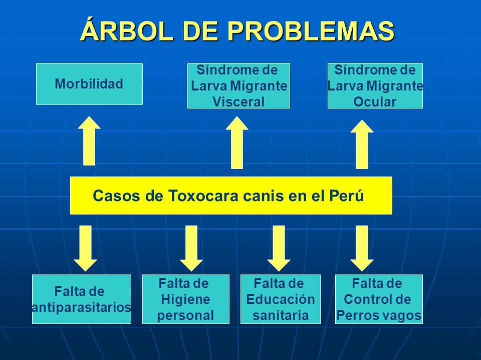 ÁRBOL DE PROBLEMAS Casos de Toxocara canis en el Perú Morbilidad Síndrome de Larva Migrante Visceral Síndrome de Larva Migrante Ocular Falta de antipa