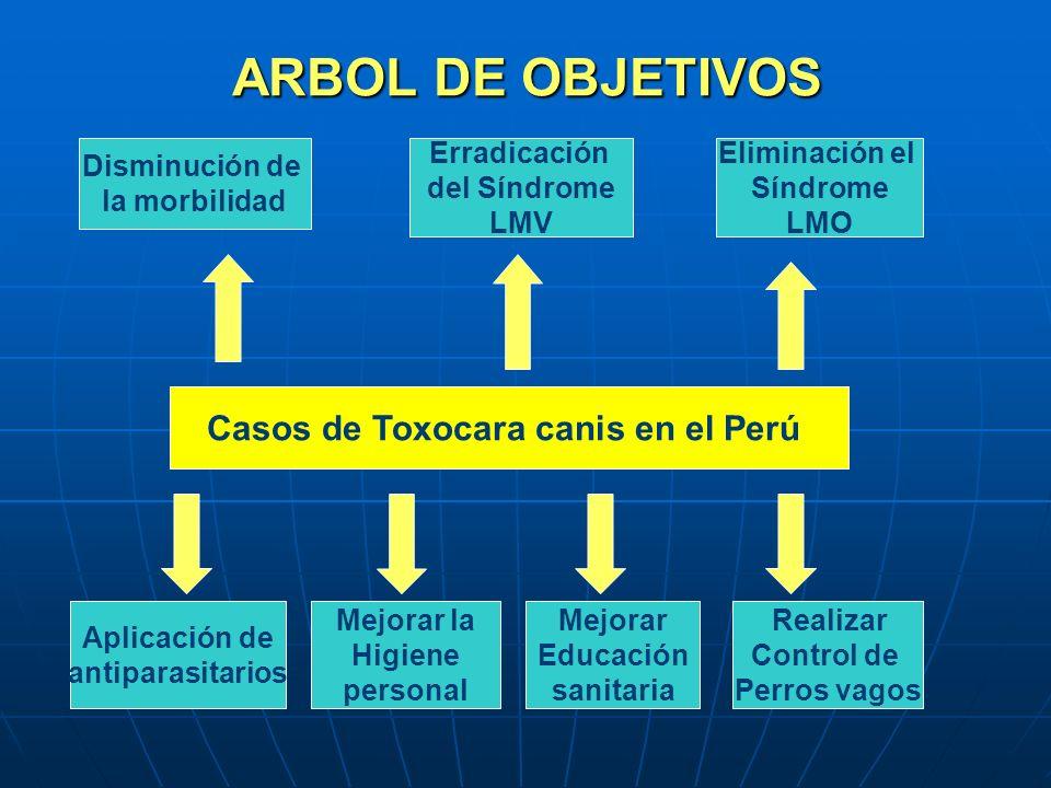 ARBOL DE OBJETIVOS Casos de Toxocara canis en el Perú Disminución de la morbilidad Erradicación del Síndrome LMV Eliminación el Síndrome LMO Aplicació