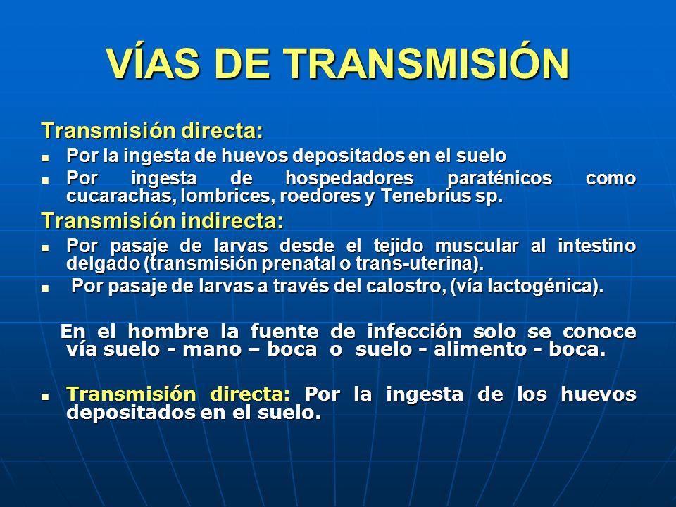 VÍAS DE TRANSMISIÓN Transmisión directa: Por la ingesta de huevos depositados en el suelo Por la ingesta de huevos depositados en el suelo Por ingesta