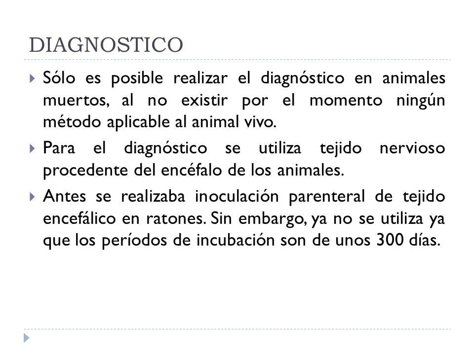DIAGNOSTICO Sólo es posible realizar el diagnóstico en animales muertos, al no existir por el momento ningún método aplicable al animal vivo. Para el