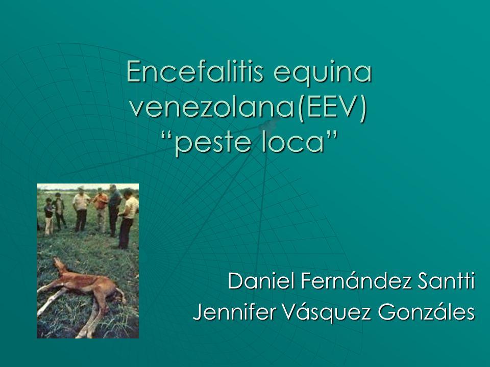 Zoonosis viral que afecta a los equinos, pudiéndose transmitir al ser humano por medio de la picadura del mosquito.