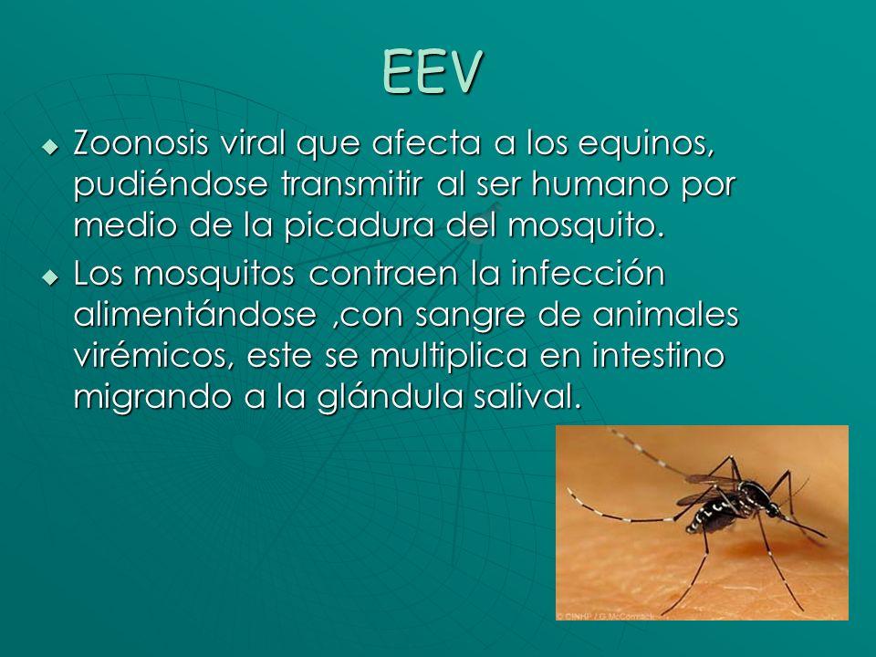 Medidas de control Venezuela 1995 Cuarentena en estados afectados Cuarentena en estados afectados Vacunación de equinos Vacunación de equinos Fumigación con insecticidas Fumigación con insecticidas