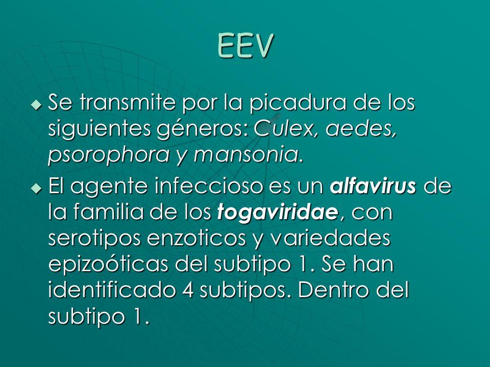 Sintomatología En humanos se presenta como una influenza.