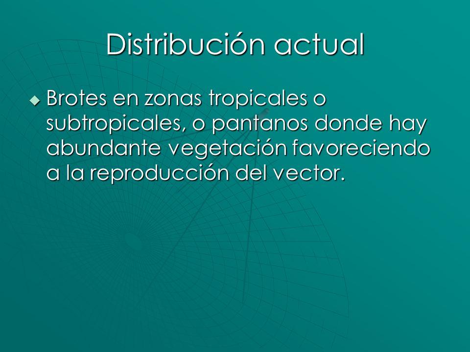Distribución actual