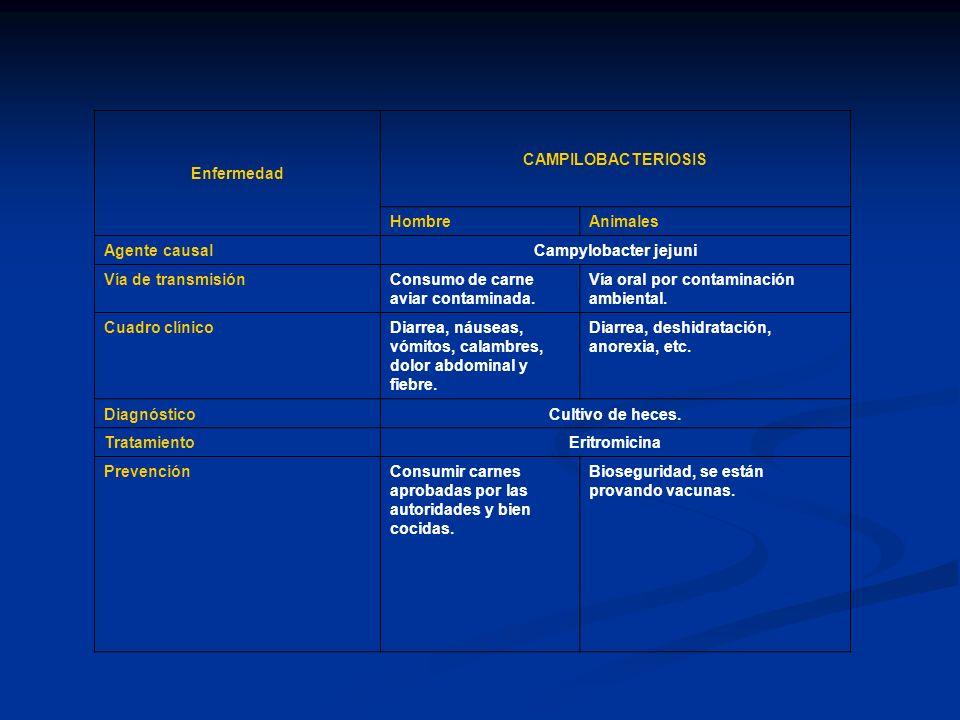 Enfermedad CAMPILOBACTERIOSIS HombreAnimales Agente causal Campylobacter jejuni Vía de transmisiónConsumo de carne aviar contaminada. Vía oral por con