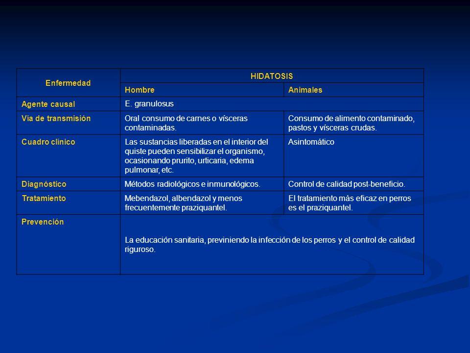 Enfermedad HIDATOSIS HombreAnimales Agente causal E. granulosus Vía de transmisiónOral consumo de carnes o vísceras contaminadas. Consumo de alimento