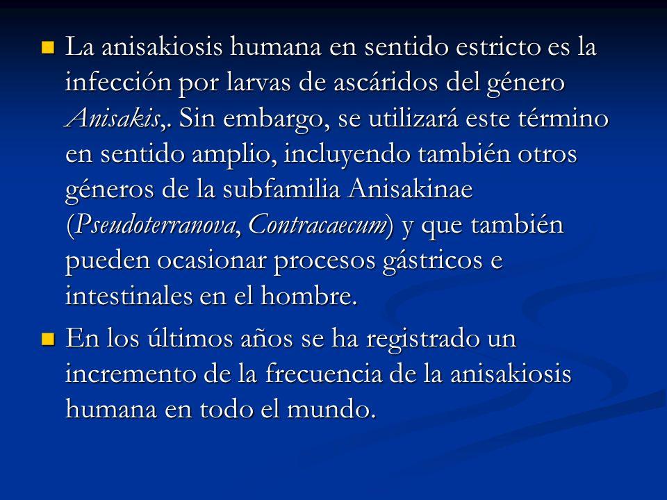 La anisakiosis humana en sentido estricto es la infección por larvas de ascáridos del género Anisakis,. Sin embargo, se utilizará este término en sent