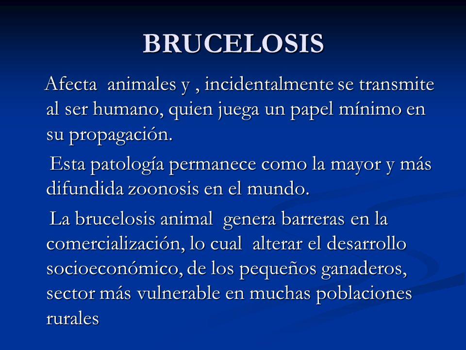 BRUCELOSIS Afecta animales y, incidentalmente se transmite al ser humano, quien juega un papel mínimo en su propagación. Afecta animales y, incidental