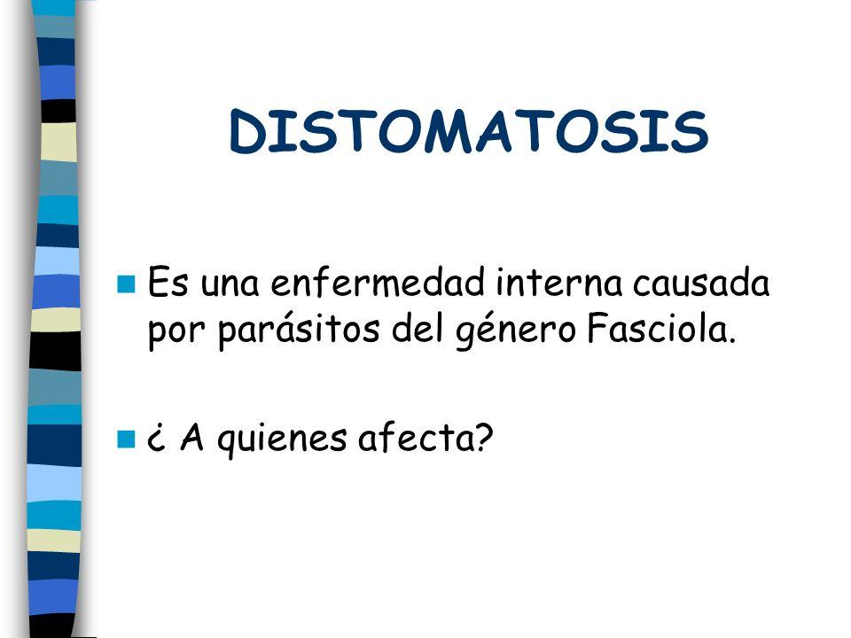 Es una enfermedad interna causada por parásitos del género Fasciola. ¿ A quienes afecta?
