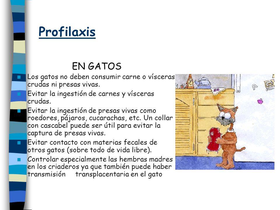 Profilaxis EN GATOS Los gatos no deben consumir carne o vísceras crudas ni presas vivas. Evitar la ingestión de carnes y vísceras crudas. Evitar la in