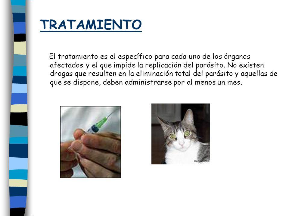 TRATAMIENTO El tratamiento es el específico para cada uno de los órganos afectados y el que impide la replicación del parásito. No existen drogas que