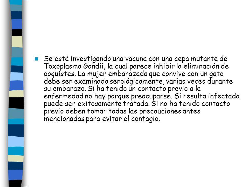 Se está investigando una vacuna con una cepa mutante de Toxoplasma Gondii, la cual parece inhibir la eliminación de ooquistes. La mujer embarazada que