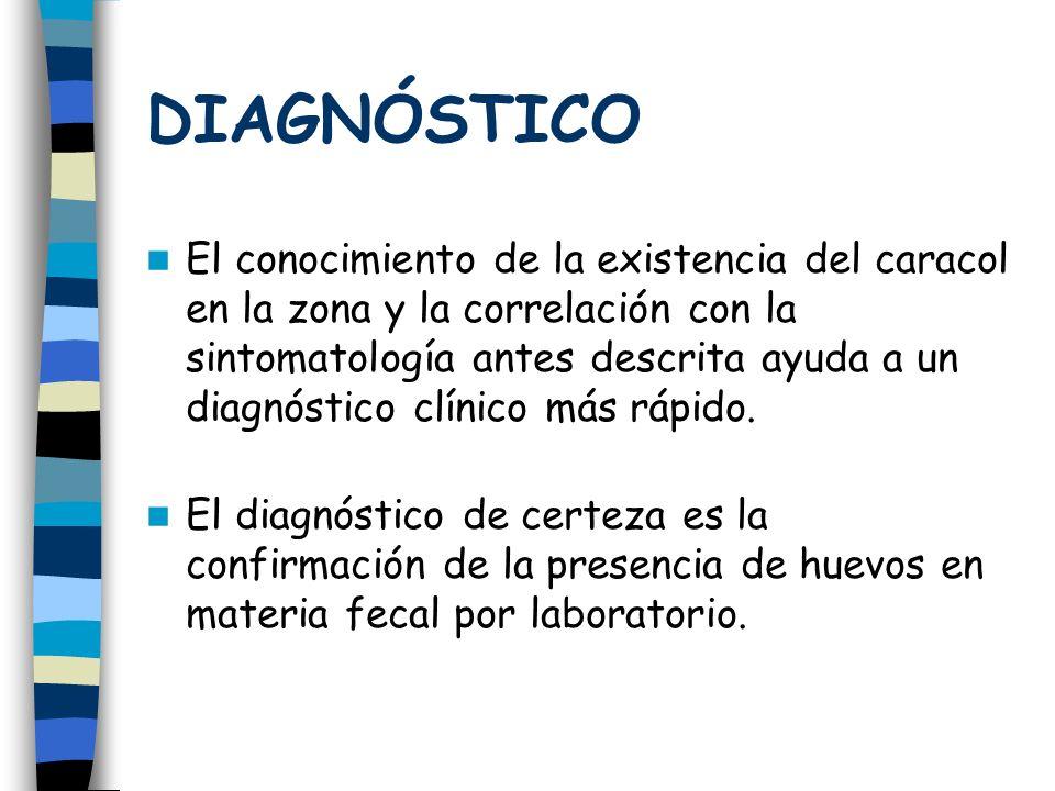 DIAGNÓSTICO El conocimiento de la existencia del caracol en la zona y la correlación con la sintomatología antes descrita ayuda a un diagnóstico clíni