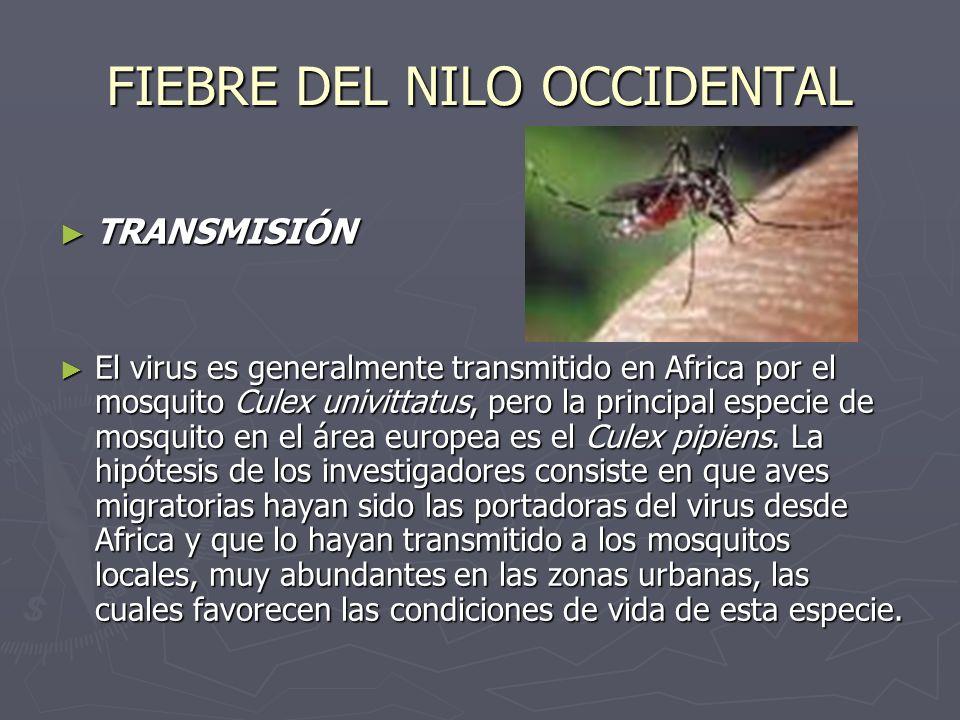FIEBRE DEL NILO OCCIDENTAL TRANSMISIÓN TRANSMISIÓN El virus es generalmente transmitido en Africa por el mosquito Culex univittatus, pero la principal