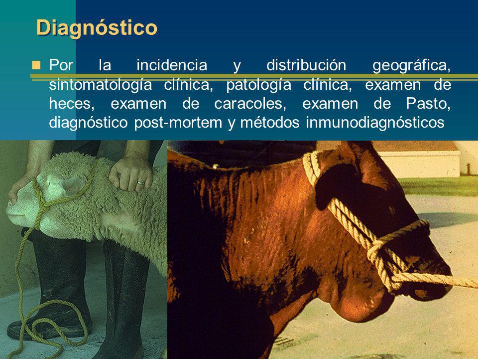 Distomatosis en humanos Perú desde 1963 se han reportado un total de 1686 casos en casi todos los departamentos del país, siendo particularmente importantes en el Valle del Mantaro, Valle de Cajamarca y Asillo en Puno consideradas como zonas endémicas de la enfermedad.