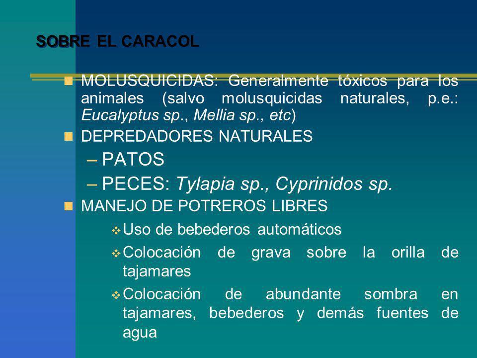 SOBRE EL CARACOL MOLUSQUICIDAS: Generalmente tóxicos para los animales (salvo molusquicidas naturales, p.e.: Eucalyptus sp., Mellia sp., etc) DEPREDAD