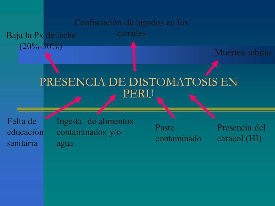 PRESENCIA DE DISTOMATOSIS EN PERU Falta de educación sanitaria Ingesta de alimentos contaminados y/o agua Presencia del caracol (HI) Pasto contaminado