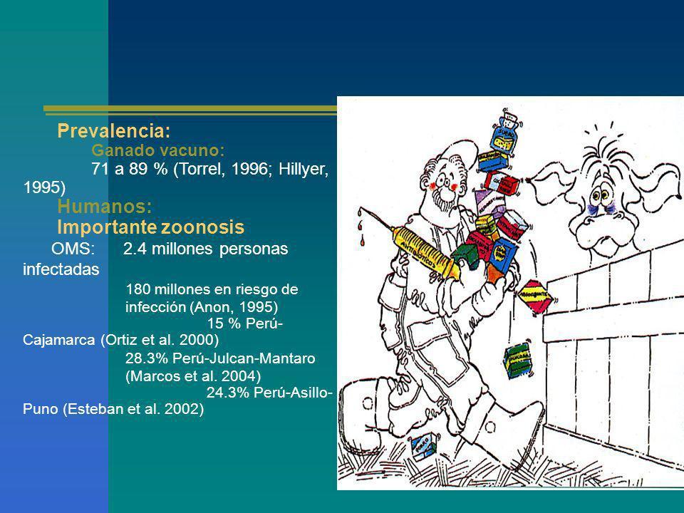 Prevalencia: Ganado vacuno: 71 a 89 % (Torrel, 1996; Hillyer, 1995) Humanos: Importante zoonosis OMS: 2.4 millones personas infectadas 180 millones en