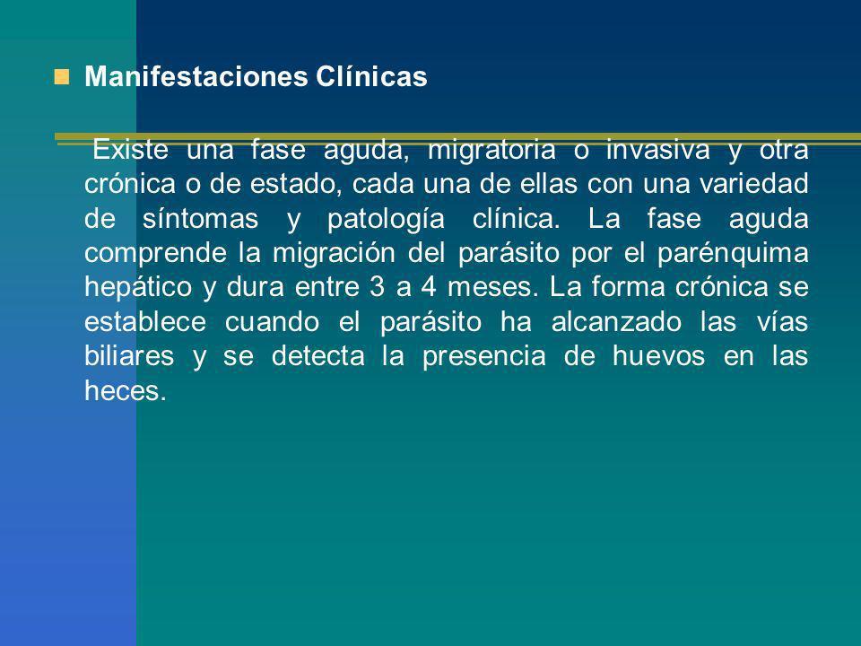 Manifestaciones Clínicas Existe una fase aguda, migratoria o invasiva y otra crónica o de estado, cada una de ellas con una variedad de síntomas y pat