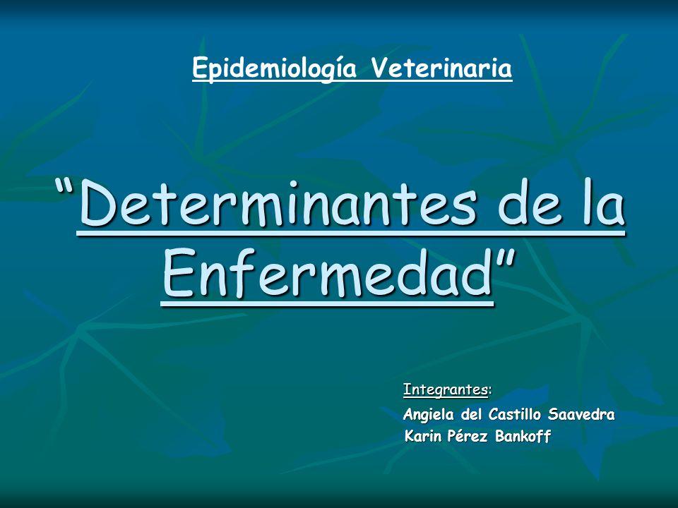 Determinantes de la EnfermedadDeterminantes de la Enfermedad Integrantes: Integrantes: Angiela del Castillo Saavedra Angiela del Castillo Saavedra Kar