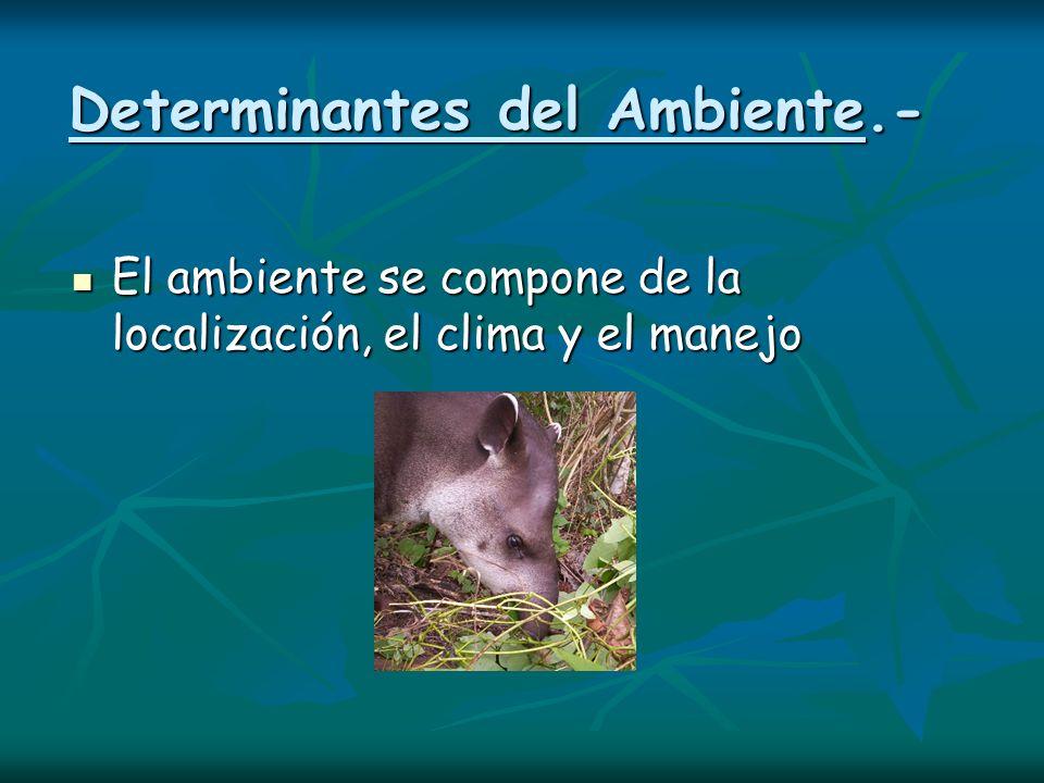 Determinantes del Ambiente.- El ambiente se compone de la localización, el clima y el manejo El ambiente se compone de la localización, el clima y el