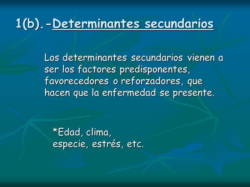 1(b).-Determinantes secundarios Los determinantes secundarios vienen a ser los factores predisponentes, favorecedores o reforzadores, que hacen que la