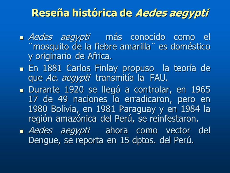Reseña histórica de Aedes aegypti Reseña histórica de Aedes aegypti Aedes aegypti más conocido como el ¨mosquito de la fiebre amarilla¨ es doméstico y originario de Africa.