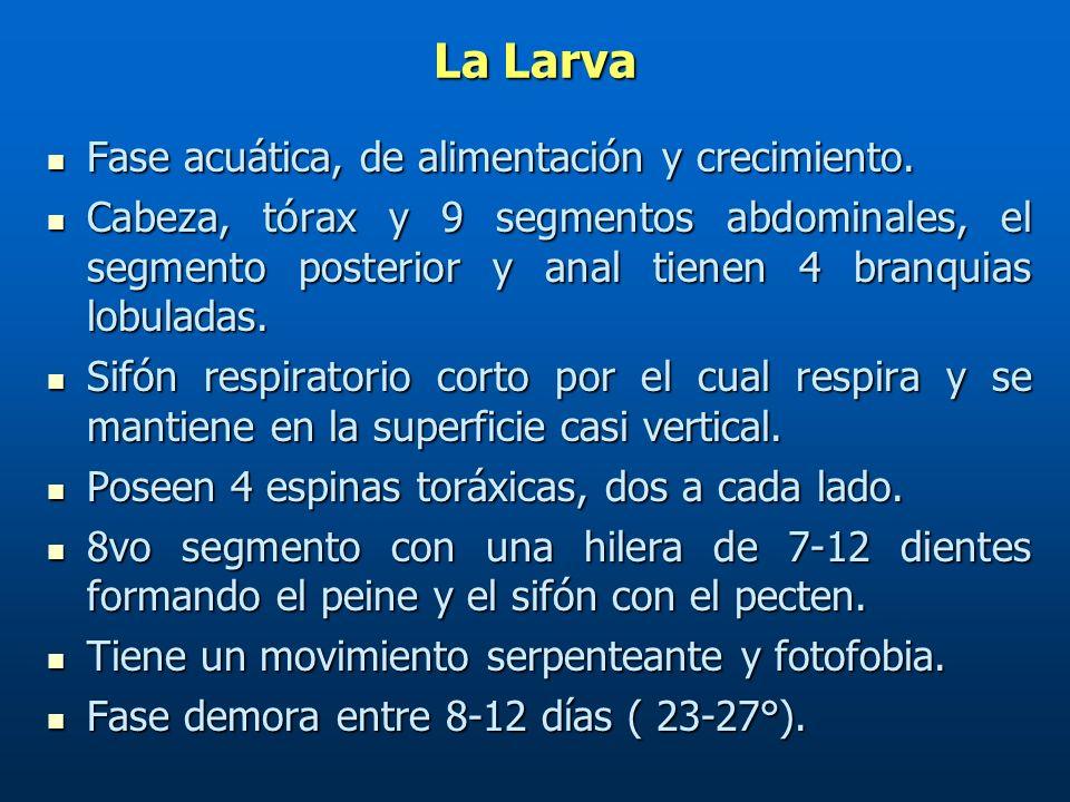 CARACTERISTICAS DIFERENCIALES DE HUEVOS DE MOSQUITOS