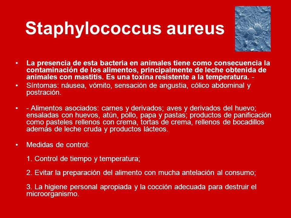 Staphylococcus aureus La presencia de esta bacteria en animales tiene como consecuencia la contaminación de los alimentos, principalmente de leche obt