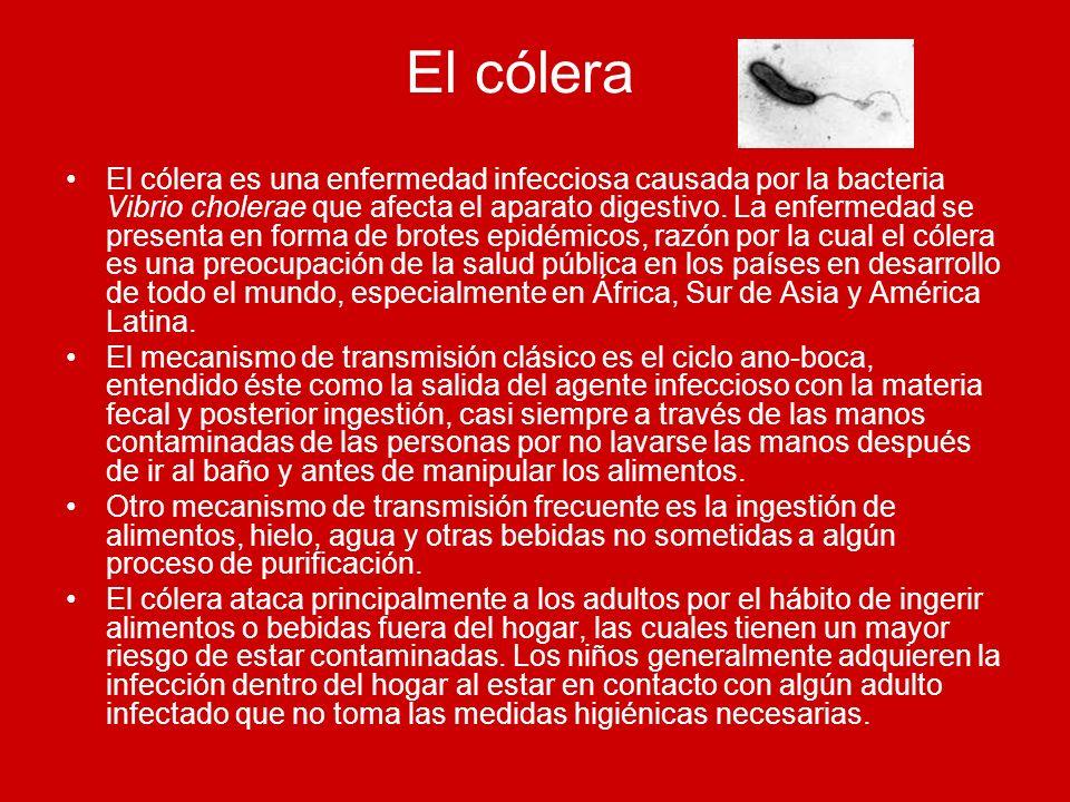 El cólera El cólera es una enfermedad infecciosa causada por la bacteria Vibrio cholerae que afecta el aparato digestivo. La enfermedad se presenta en