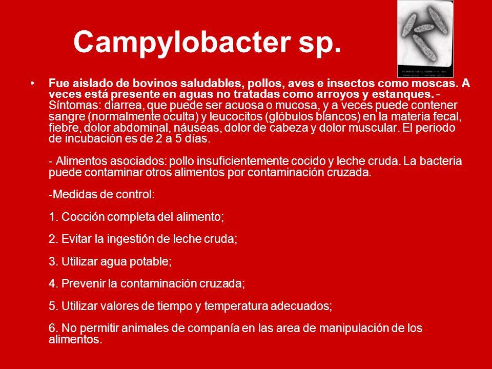 Campylobacter sp. Fue aislado de bovinos saludables, pollos, aves e insectos como moscas. A veces está presente en aguas no tratadas como arroyos y es