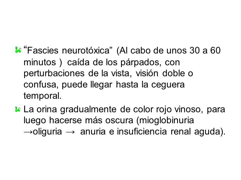 Fascies neurotóxica (Al cabo de unos 30 a 60 minutos ) caída de los párpados, con perturbaciones de la vista, visión doble o confusa, puede llegar has