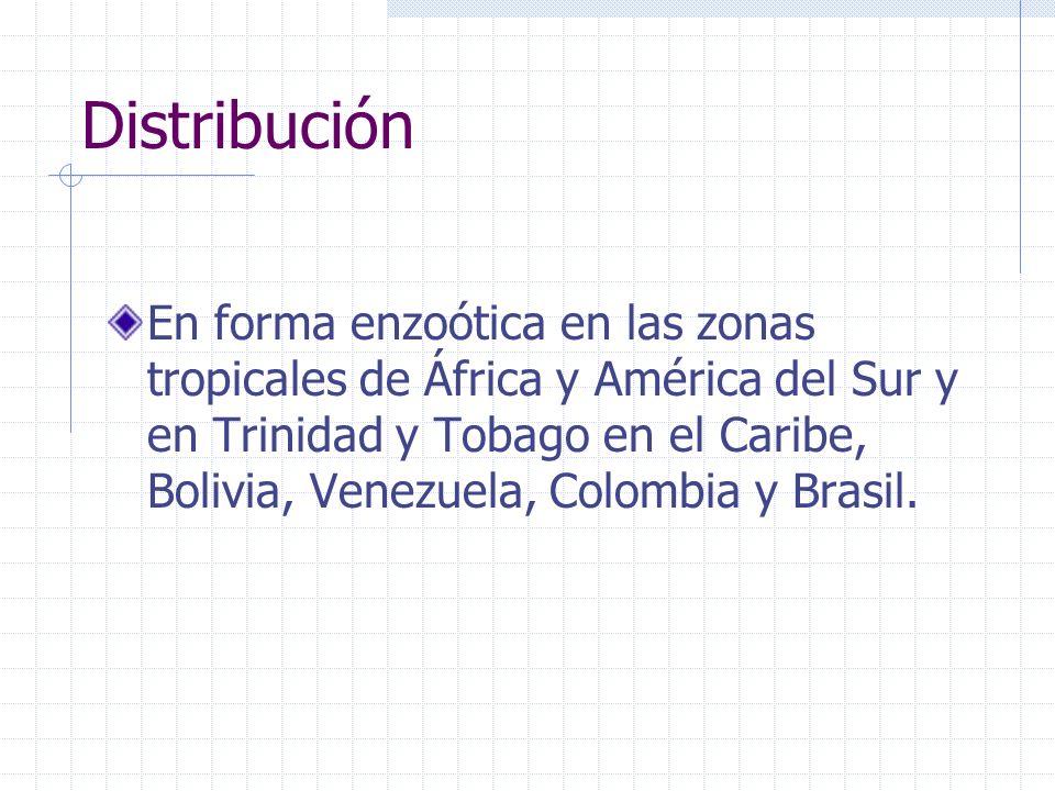 Distribución En forma enzoótica en las zonas tropicales de África y América del Sur y en Trinidad y Tobago en el Caribe, Bolivia, Venezuela, Colombia