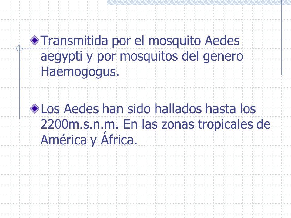 Transmitida por el mosquito Aedes aegypti y por mosquitos del genero Haemogogus. Los Aedes han sido hallados hasta los 2200m.s.n.m. En las zonas tropi