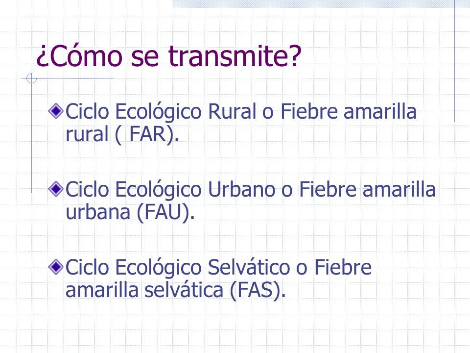 ¿Cómo se transmite? Ciclo Ecológico Rural o Fiebre amarilla rural ( FAR). Ciclo Ecológico Urbano o Fiebre amarilla urbana (FAU). Ciclo Ecológico Selvá