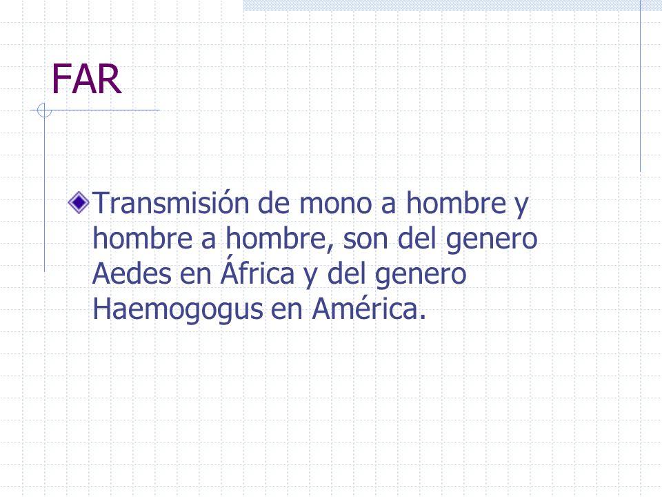 FAR Transmisión de mono a hombre y hombre a hombre, son del genero Aedes en África y del genero Haemogogus en América.
