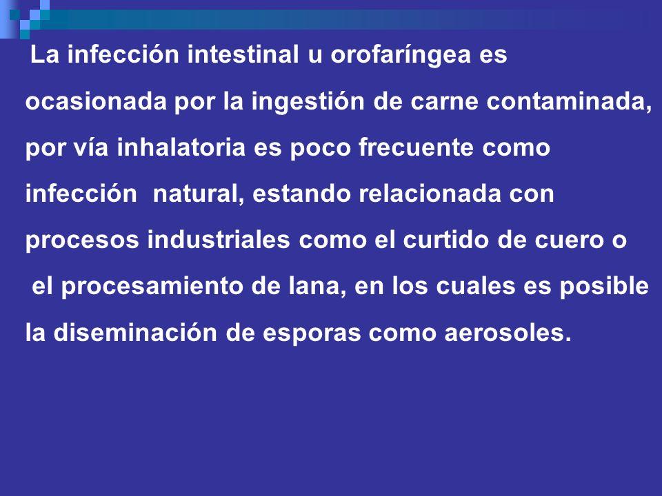 La infección intestinal u orofaríngea es ocasionada por la ingestión de carne contaminada, por vía inhalatoria es poco frecuente como infección natura