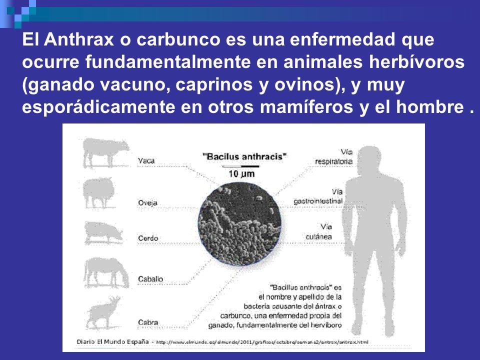 El Anthrax o carbunco es una enfermedad que ocurre fundamentalmente en animales herbívoros (ganado vacuno, caprinos y ovinos), y muy esporádicamente e