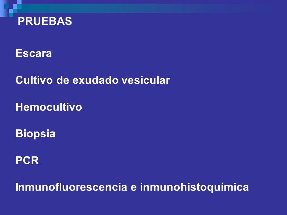 Escara Cultivo de exudado vesicular Hemocultivo Biopsia PCR Inmunofluorescencia e inmunohistoquímica PRUEBAS