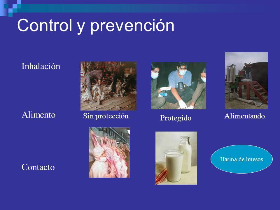 Control y prevención Inhalación Contacto Sin protección Protegido Alimentando Alimento Harina de huesos