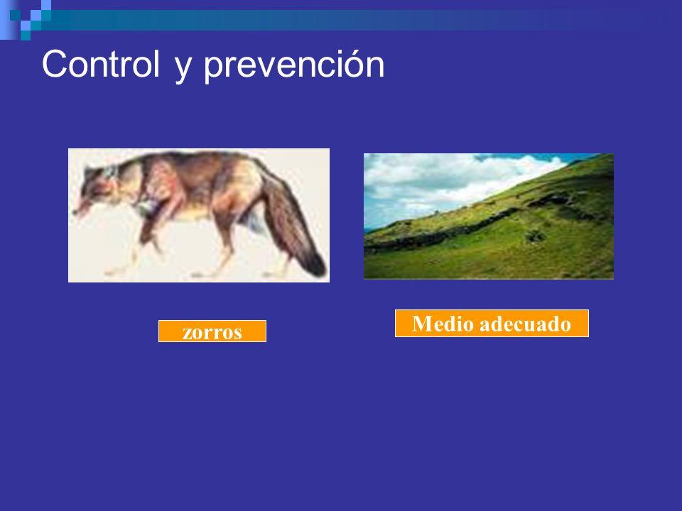 Control y prevención zorros Medio adecuado