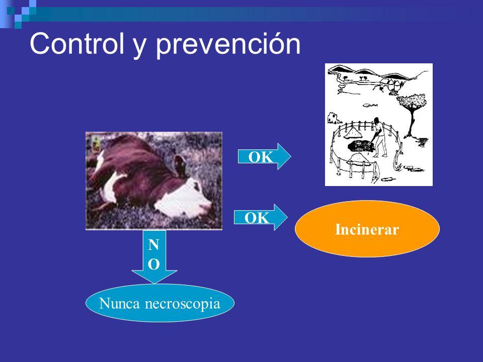 Control y prevención OK NONO Nunca necroscopia Incinerar OK